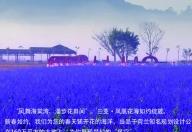 三亚凤凰花海