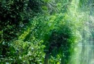 呀诺达雨林