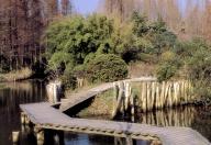 崇明东平森林公园