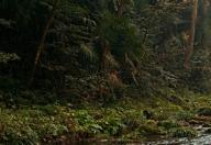小溪自然保护区